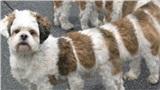 Rợn người với ảnh các 'boss' chụp Panorama: Cắt thân, mất đầu, dài như quái vật thuồng luồng... đủ cả
