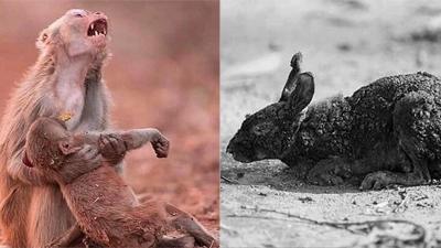 Xót xa nhìn những con thú chết cháy khi rừng Amazon bị 'bà hỏa' ghé thăm