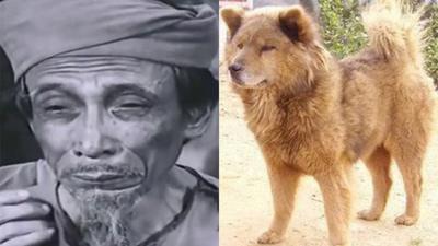 Trong khi 'Cậu Vàng' dùng chó Nhật, 39 năm trước điện ảnh Việt Nam đã có 'Cậu Vàng' là chó Việt, khôn nức tiếng thế này
