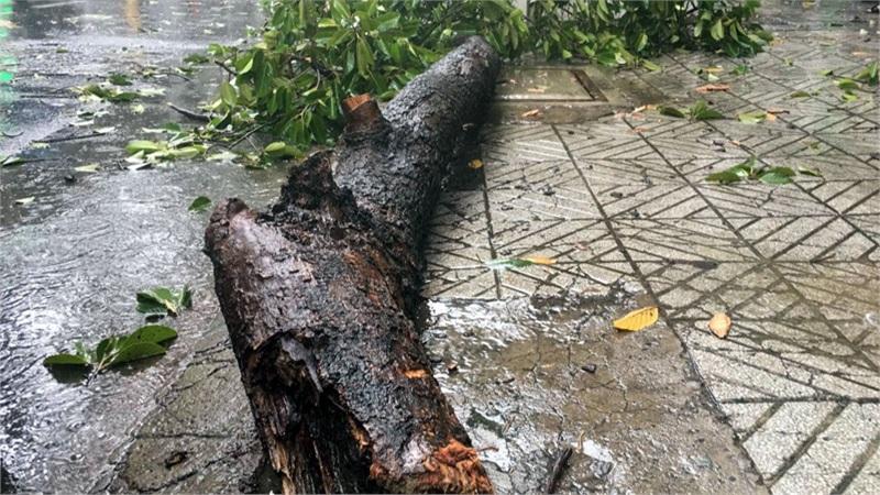 TP HCM: Mưa lớn, cây xanh đổ làm 2 người đi đường bị thương