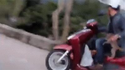 Xôn xao clip đôi vợ chồng bắt trộm khỉ con khi đi chùa, mặc cho cả đàn lao theo ngăn cản đòi con