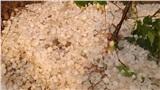 Điện Biên xuất hiện mưa đá mật độ dày, phủ trắng xóa ruộng lúa, vườn nhà