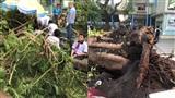 NÓNG: Hình ảnh hiện trường vụ cây đổ đè 13 học sinh