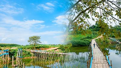 Làng quê xứ Quảng với cầu tre và cây cô đơn đẹp như trong 'Mắt biếc' hứa hẹn trở thành điểm check-in hot