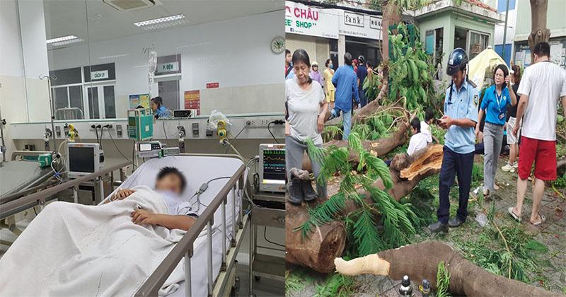 TIN MỚI NHẬN: 7 học sinh bị cây phượng đè được xác định thương tích khá nặng