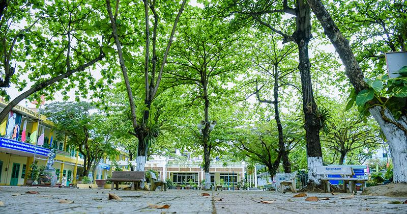 Chùm ảnh: Cây xanh trong trường học và nỗi ám ảnh gãy, đổ vào mùa mưa
