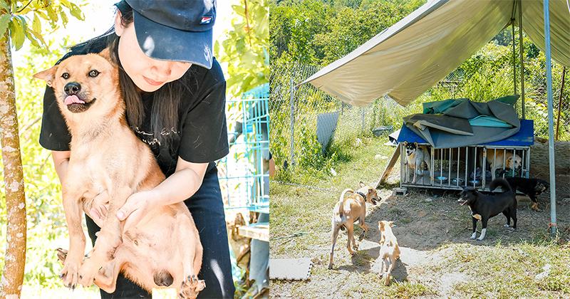 Chùm ảnh: Cuộc sống của những chú chó bị bỏ rơi nơi 'mái ấm' cách xa khu dân cư ở Đà Nẵng