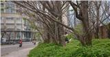 Hàng cây rụng lá đẹp như phim trường Hàn Quốc trở thành điểm check-in hot ở Đà Nẵng
