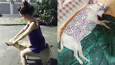 Chú chó 4 tuổi ở Sài Gòn: nặng 50kg, ăn cả thế giới và… thích tiền