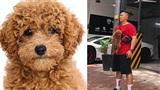 Chàng trai bất ngờ nổi tiếng vì chụp ảnh thẻ cho chó: 'Trả 10 tỷ mua lại mình cũng không bán'