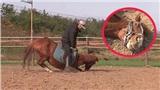Con ngựa lười nhất thế giới: Hễ ai đòi cưỡi là giả vờ chết