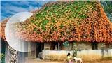 Xôn xao thông tin giàn hoa xác pháo phủ khắp ngôi nhà nổi tiếng ở Bảo Lộc bị 'vác' về Hà Nội với giá 16 triệu đồng!?