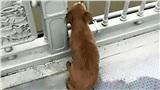 Chó trung thành đợi 4 ngày trên cầu nơi chủ tự tử