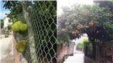 Những bé cây mọc 'sai trái' khiến gia chủ phát bực, nhọc nhằn công chăm sóc mà người hưởng lại là gã hàng xóm lâu năm