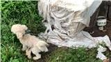 Hiện thực như địa ngục trong các lò lai chó 'thuần chủng' và cái kết tuyệt vời cho hơn 80 chú khuyển tội nghiệp
