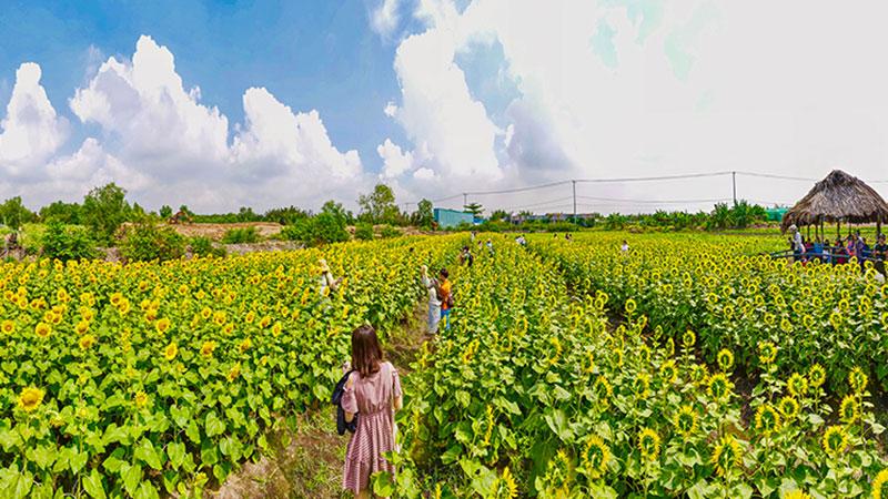 Mê mẩn cánh đồng hoa hướng dương 'hút' giới trẻ check-in dịp cuối tuần ở Sài Gòn
