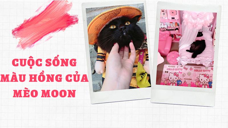 Cuộc sống 'nhung lụa' của chú mèo đen trong căn phòng màu hồng: Chi phí sinh hoạt từ 3 đến 5 triệu đồng/tháng