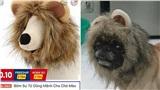 Bỏ 69k đặt mua 'bờm sư tử dũng mãnh' cho pet, khách hoảng hồn khi nhận sản phẩm về tay như đạo cụ phim kinh dị
