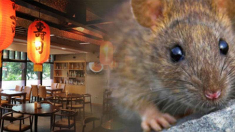 Nữ thực khách tố đi ăn nhà hàng kiểu Nhật ở Hà Nội bị chuột bò lên lưng rồi cắn đúng tối 20/10