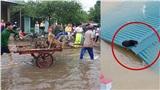 Hàng trăm con vật được cứu khỏi vùng ngập, dân mạng cấp bách lan truyền hình ảnh chú chó nằm trên 'nóc lũ' chờ trợ giúp