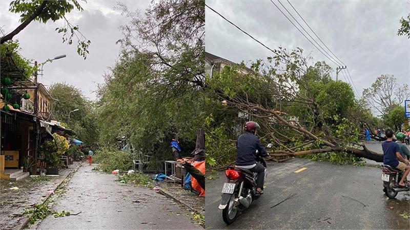 Phố cổ Hội An tan hoang sau bão số 9: Nhiều cây lớn ngã đổ chắn lối đi