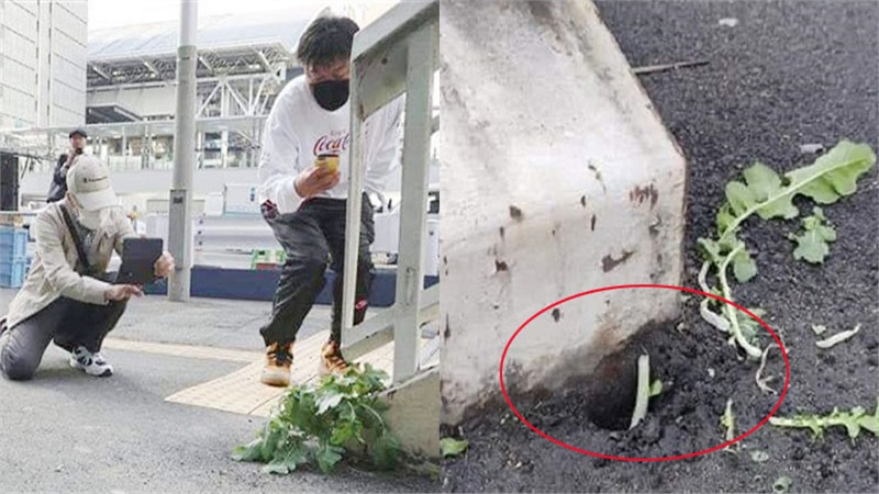 Xôn xao thông tin củ cải trắng tại Nhật Bản đã bị ai đó nhổ đi mất: Nhiều người thở dài vì mất đi điểm check in đáng yêu