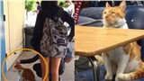Chú mèo hiếu học: Học cả ngày không mệt, đi sớm đứng trước lớp chờ đến tiết, tốt nghiệp rồi vẫn còn đến trường