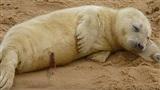 Ở đây bán sự đáng yêu: Chú hải cẩu con lấy vỏ chai nhựa làm gối, nằm say giấc nồng bên bãi biển hiu hiu mát lạnh