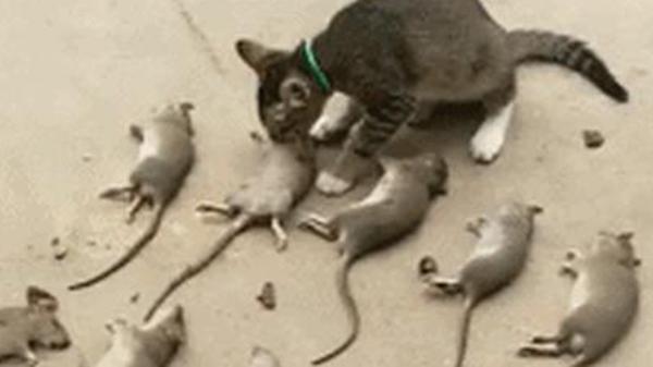 1 năm sau ngày được cưu mang, cô mèo này khiến cả làng chết khiếp vì hành động 'trả ơn' kinh dị của mình