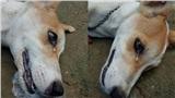 Chó cưng sủa liên tục trong đêm, nhà chủ không mảy may nghi ngờ, đến sáng thấy cảnh đau lòng mới biết nhờ gia đình thoát nạn