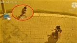 Cạn lời người phụ nữ thả 'bom' trước cửa nhà hàng xóm để trả đũa vì để chó sang 'đi nặng'