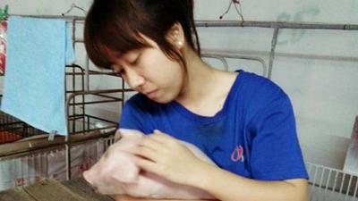 Kì thực tập bên đàn lợn của cô sinh viên trường Nông Lâm 'đốn tim' cộng đồng mạng