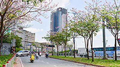 Giữa thời tiết nóng nực, Sài Gòn bỗng có một mùa hoa