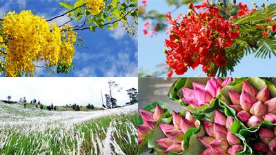 Đi qua những mùa hoa, mới thấy yêu thêm tháng 6