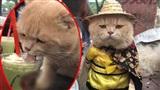 Chủ nhân chú mèo 'hoàng thượng' lên tiếng về vụ cho 'boss' ăn chung khi đi coffee