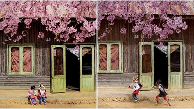 Đà Lạt nhỏ xinh mùa hoa mai anh đào, đi một bước bạn có thể chụp hàng trăm bức ảnh đẹp mê li