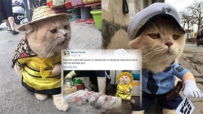 Chú mèo tên Chó ở Hải Phòng lại gây bão trang báo nước ngoài