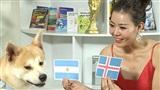 Sở thú WC2018: Chỉ mỗi chú chó Momo dự đoán Iceland hoà Argentina