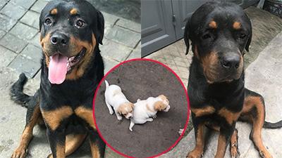 Chú chó trầm cảm vì không được nuôi con 'người' khác, chuyện lạ đời nhưng có thật