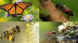 Dành 1 phút để biết tính cách của bạn giống loài côn trùng nào?