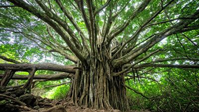 Bạn bị thu hút bởi cái cây nào, đáp án sẽ giúp bạn tìm ra hình mẫu lý tưởng của mình
