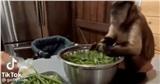 Clip chú khỉ ngồi cặm cụi nhặt rau như con người thu hút 5 triệu lượt xem, tưởng gương mặt lạ nhưng hóa ra lại là 'ngôi sao'' đình đám Tiktok