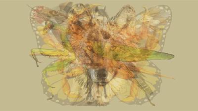 Nhìn vào bức tranh này đi, con vật đầu tiên mà bạn nhìn thấy sẽ bật mí đặc điểm thú vị về tính cách của bạn