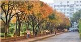 Ngôi trường đại học đẹp nhất mùa thay lá ở Hà Nội: Vàng rực ngợp khắp lối đi, sinh viên chụp ảnh sống ảo không khác gì Hàn Quốc