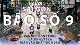 Người Sài Gòn hoang mang khi rắn rết, côn trùng và sinh vật lạ tràn vào nhà 'trốn bão' ké
