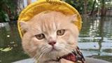 Gặp gỡ chú mèo 'Quàng Thượng' đi vi hành mùa mưa khiến dân tình được phen dậy sóng