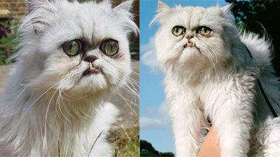 Tất tần tật về chú mèo cau có nổi tiếng: thích tắm, tiệc tùng và chụp ảnh