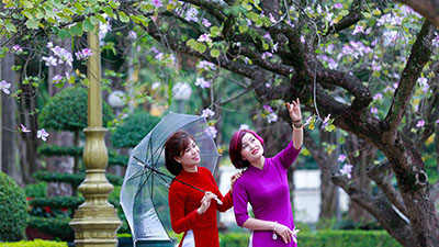 Lần đầu tiên Hà Nội tổ chức Lễ hội Hoa ban, mang cả núi rừng Tây Bắc về với thủ đô