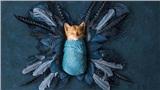 Khi mà 'sen' là nhiếp ảnh gia thì 'boss' mèo phải trở thành mẫu ảnh bất đắc dĩ mà thôi!