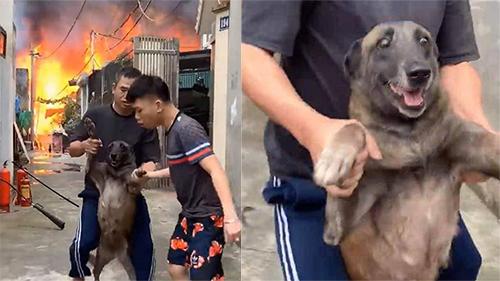 Chú chó ngơ ngác bị chủ kéo xềnh xệch ra khỏi đám cháy với biểu cảm khó đỡ: 'Tôi là ai, đây là đâu'